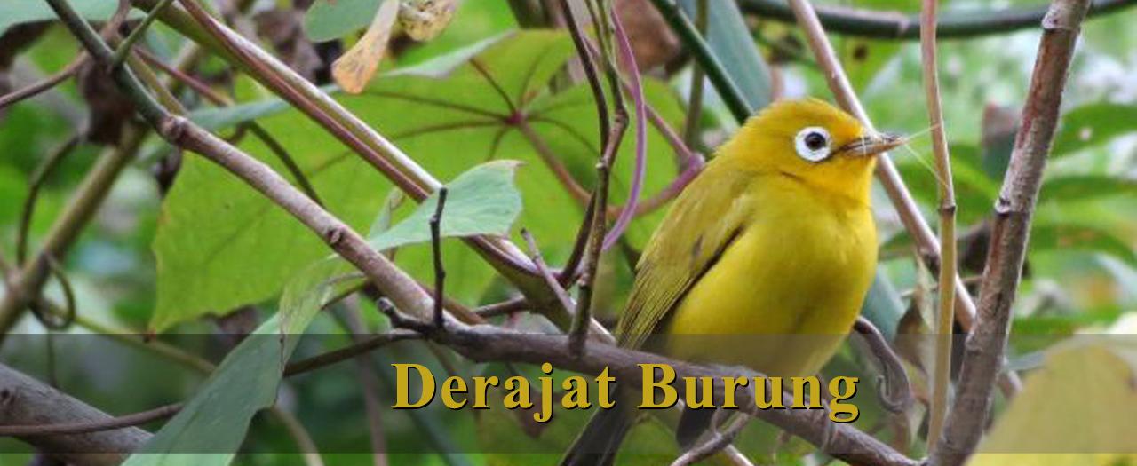 Derajat Burung