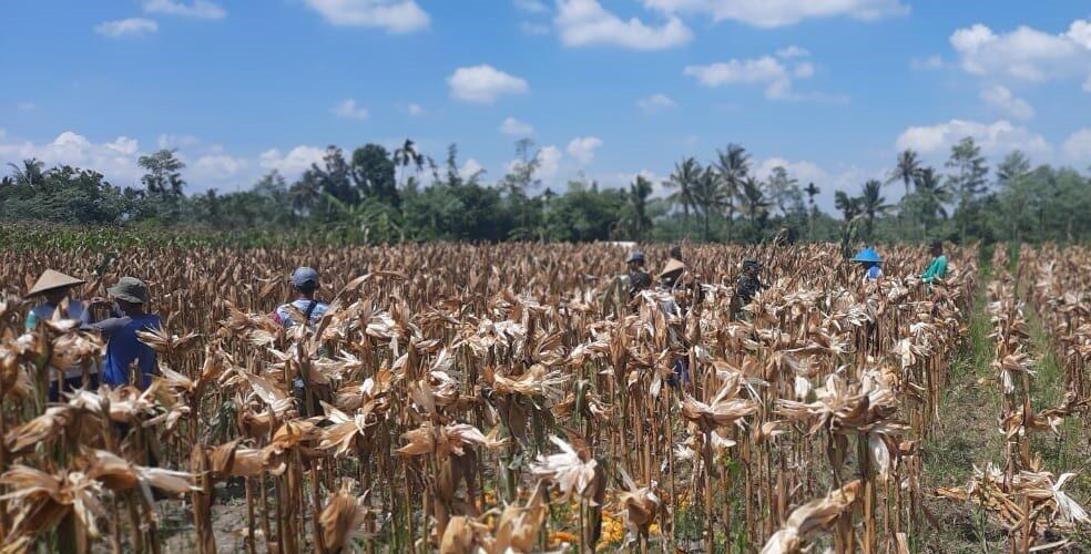 Desa Sukadana, Kembangkan Ngadas Dari Tanah Pecatu