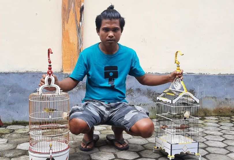 burung kecial kuning, pleci, kacamata di lombok, pemenang kontes burung kecial, harga burung kacamata di lombok