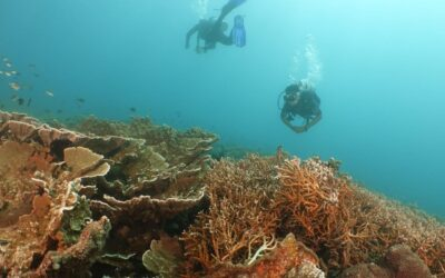 BPPD Lotim Identifikasi Potensi Wisata Bahari